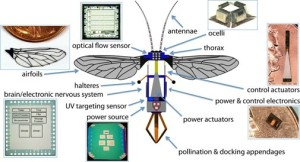 Dissected flying bug-bot